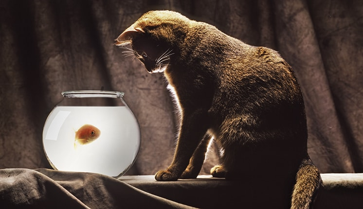 Cat Looking at fish bowl by Paul Bussell