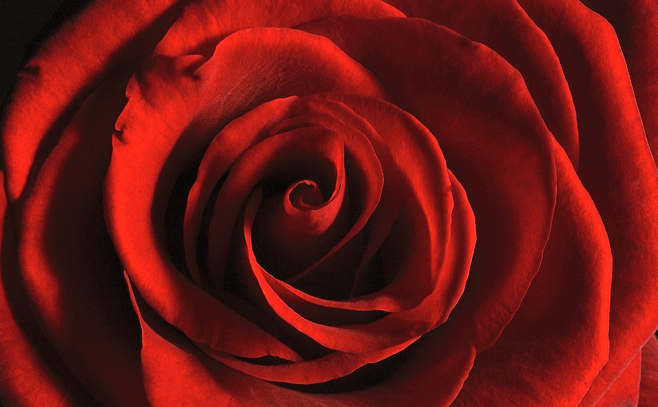 Red Rose by Paul Bussell