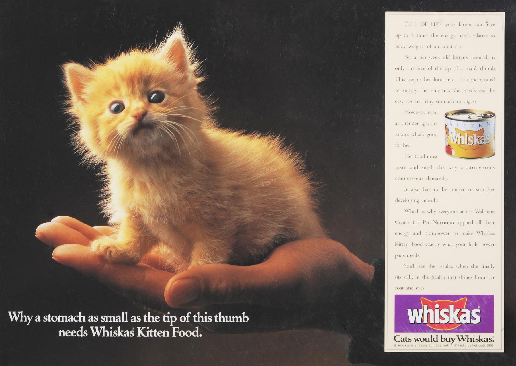 Whiskas Kitten by Paul Bussell