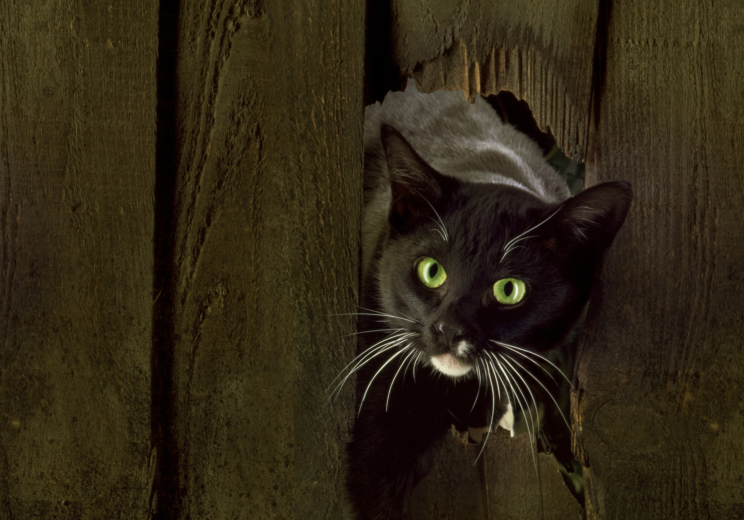 Cat through fence by Paul Bussell